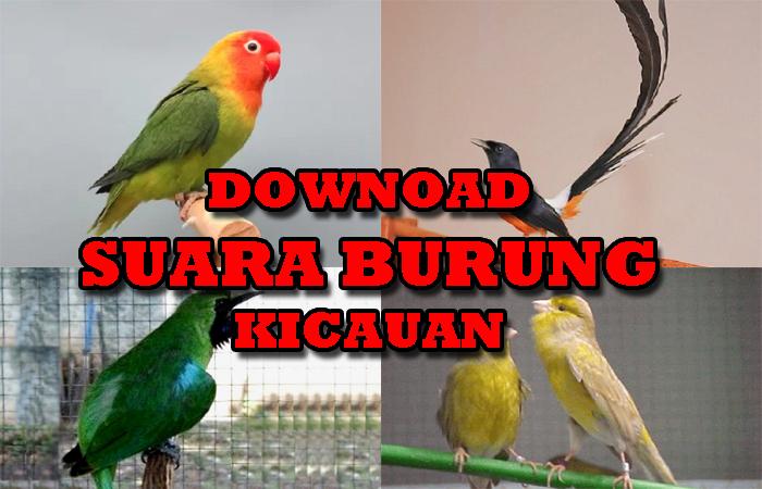 download-suara-burung